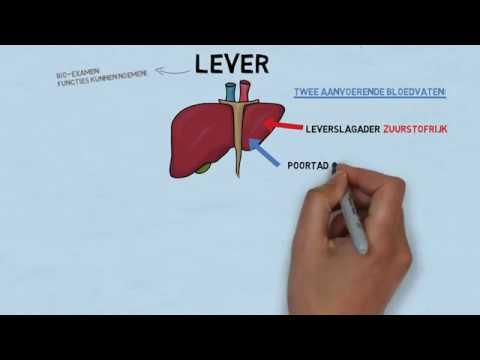 Uitleg examenstof biologie door SSL: de lever