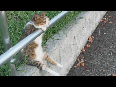 夕暮れの お座り猫ちゃん /Cat sitting relaxed   Cat+1 Channel (видео)