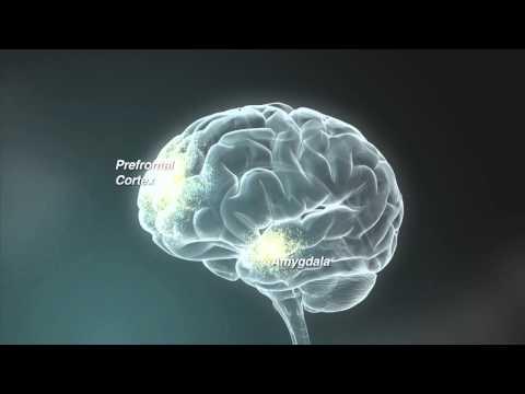 En Breve: La Función Ejecutiva — Habilidades para la vida y el aprendizaje