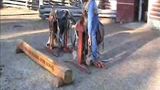 Saddling a horse - Part 1/4