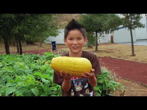 Suisun Valley k-8 School Edible Schooyard - 2017
