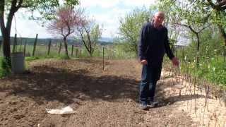 malč, mulch, zaštita voća  od trave, kalemljene sadnice