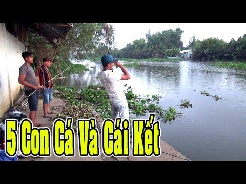 Câu cá tra sông mồi câu của thằng em siêu nhại 5 con cá lên bờ/Fishing/NGÃ NĂM TV - Thời lượng: 18 phút.
