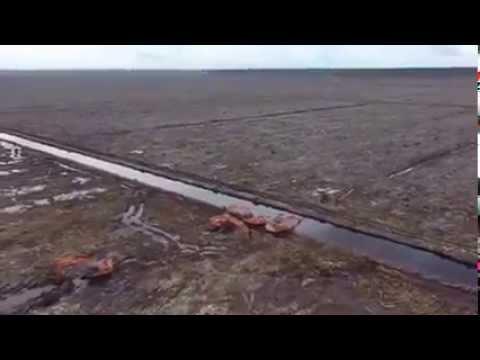 la distruzione della foresta pluviale attraverso questo video denuncia!