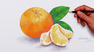 Drawing An Orange Fruit With Water Color and Colored Pencils  Drawn by using Prismacolor Premiere colored pencils and base with water colors .Time Lapse Drawing.Time taken around 1.30 hours.Background Music : Faith by Vibe Tracks.If you like my video please don't forget to subscribe.Thanks for watching.