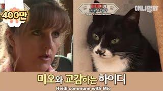 Video Violent cat Mio changes after communing with an animal communicator MP3, 3GP, MP4, WEBM, AVI, FLV Juni 2018