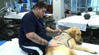 Therapy Dogs Help Wounded Warriors Heal