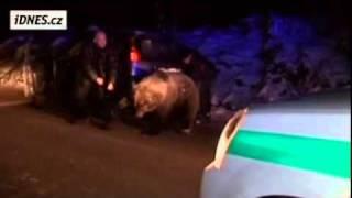 Video 1. 12. 2010 Takto smutne skončil medveď v Martine / Sklabini / MP3, 3GP, MP4, WEBM, AVI, FLV Mei 2017
