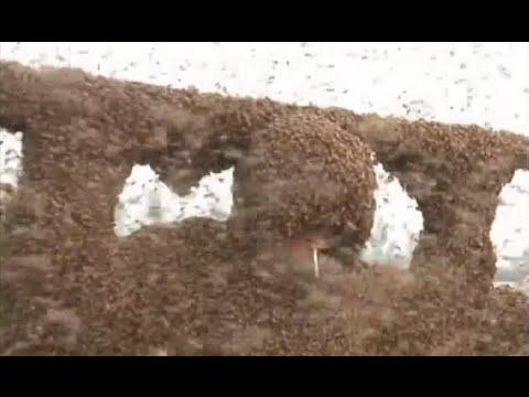 這個男人為了打破世界紀錄,居然讓100公斤重的百萬蜂群插滿身體...