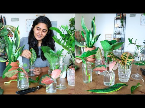 Propagating all my indoor plants from cuttings in water during the lockdown | Try with me