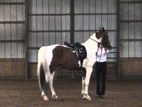 Dressage (French Classical) of Francois Baucher