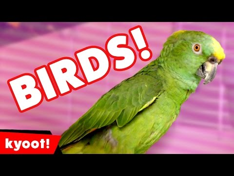 this bird compilation will have you hooting with laughter