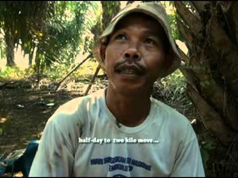 pemburu kroto a film dokumenter cara pengambilan bibit semut kroto