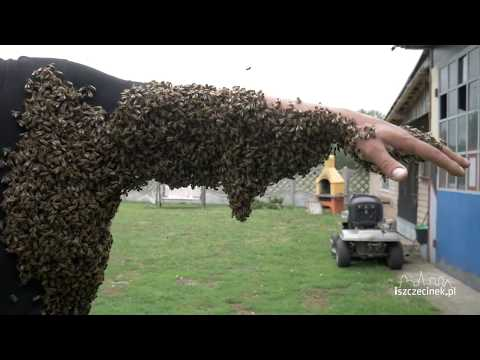 roj-pszczol-obsiadl-pszczelarza
