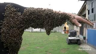 Co za hardkorowiec! Rój pszczół konkretnie obsiadł pszczelarza!