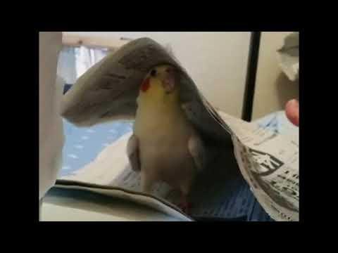 Lintu piilosilla
