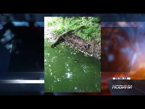 В Житомирській області зафіксовано масову загибель риби