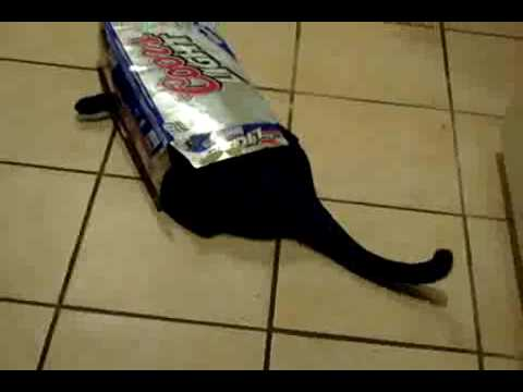 funny cat in a beer box
