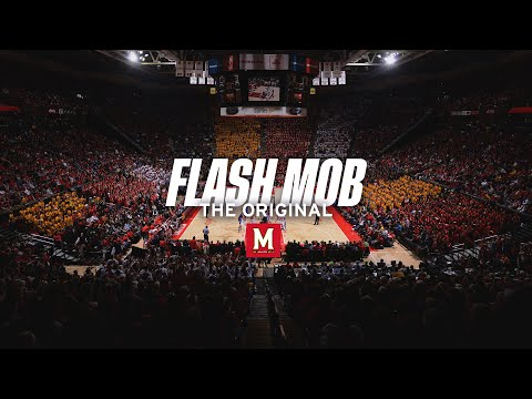 students - Feb. 16, 2013 - While the Maryland men's basketball team was defeating Duke on Saturday, the entire student section performed flash mob and Harlem Shake rout...