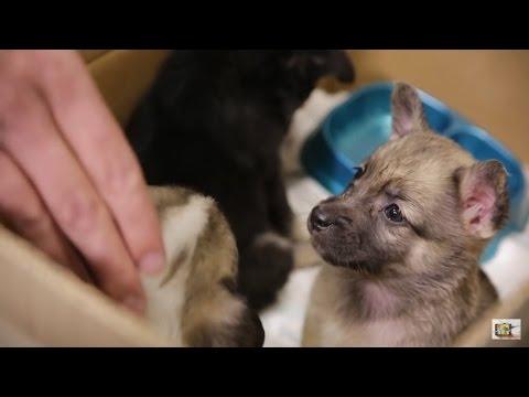 Этот фильм должен увидеть каждый Фильм до слез  Про щенка - DomaVideo.Ru