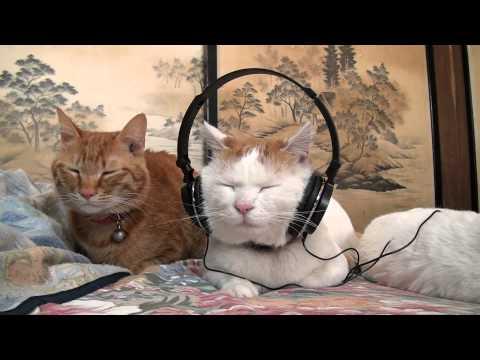 這隻貓咪真的很懂得享受,用耳機是在瘦臉嗎!?