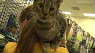 Gainesville (FL) United States  City new picture : Cat Adoption Day Update -- Gainesville, FL