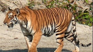 Bardia Nepal  City new picture : Bardiya National Park, a Prime Wildlife Safari Destination