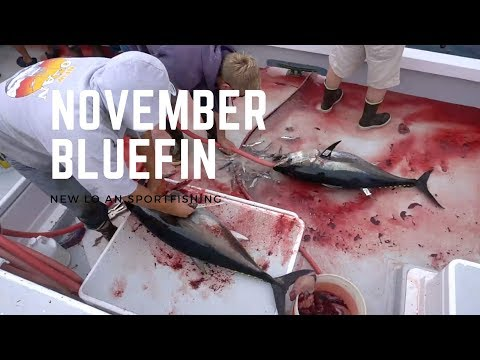 November Bluefin Fishing San Diego on the New Lo an