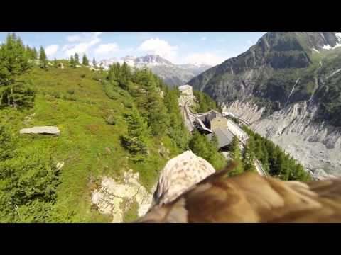 View - More new eagle point of view footage at: https://www.youtube.com/watch?v=-7IVjCQ26pE Eagle soaring next to paraglider : http://www.youtube.com/watch?v=lRbtxw...