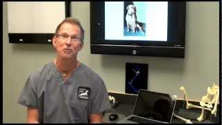 ACL Tears and the Clinical Signs seen in dogs