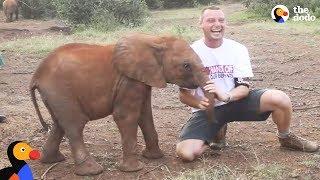 Baby Elephant ATTACKS Man | The Dodo by The Dodo