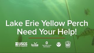 Lake Erie Yellow Perch Project Video
