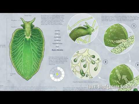 i veri alieni sono già sulla terra: metà lumaca e metà pianta!