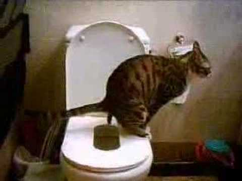 cat training toilet (large – 1)