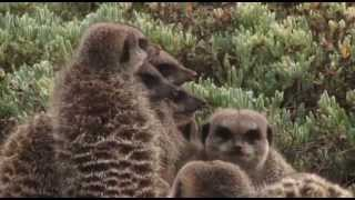 Oudtshoorn South Africa  City pictures : Meerkat Adventures Oudtshoorn South Africa