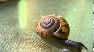 Land Snail Time Lapse