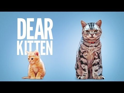 World Cup Fever, Friskie Kittens and Boiling Coca Cola video