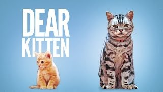 Dear Kitten - YouTube