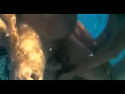 Video Nacimiento bajo el agua de bebe con delfin download in MP3, 3GP, MP4, WEBM, AVI, FLV January 2017