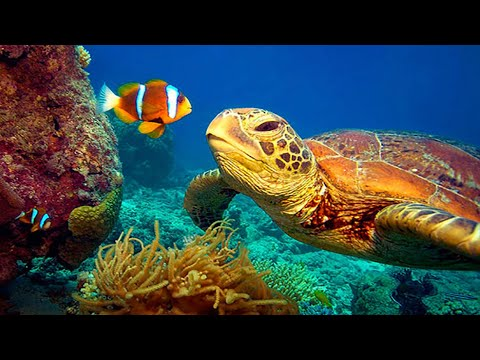 11 HOURS Stunning 4K Underwater footage + Music   Nature Relaxation™ Rare & Colorful Sea Life Video