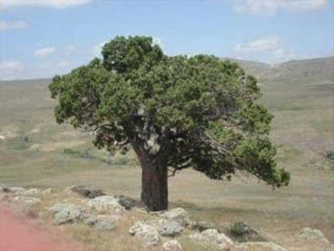 Davul Zurna Gelin Aglatma Hardal Köyü Sarkisla Sivas