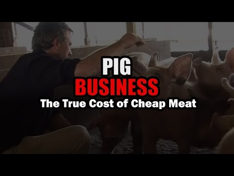 PIG BUSINESS - The film