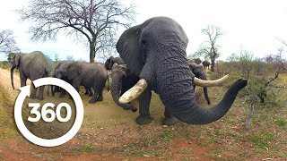 Elephants on the Brink | Racing Extinction (360 Video) by Animal Planet