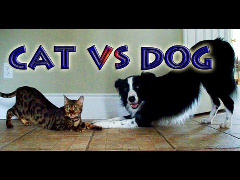 Cat And Dog Compete For Best Trick