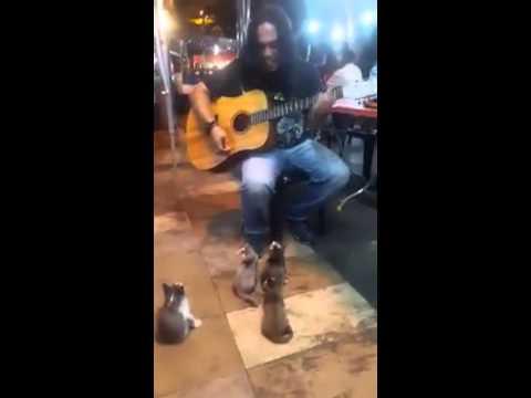 本來因沒人駐足聆聽而傷心的街頭藝人,看到4隻小貓咪出現後的反應讓他決定要唱完整首歌…