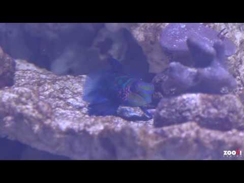 Neues Aquarium_Legjobb vide�k: Akv�rium