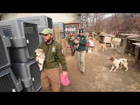 South Korea Farm Rescue