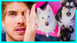 SOMETHING HAS HAPPENED TO MY PUPPIES!CRYSTAL WOLF JEWELRY!https://www.crystalwolf.co/collections/all-stylesTESTING IPHONE GADGETS!: https://www.youtube.com/watch?v=7Mypgc1vvaAPURCHASE MY NOVEL: http://joeygraceffa.com/children-of-eden-bookCRYSTAL WOLF LINE! https://www.crystalwolf.co/SUBSCRIBE: http://bit.ly/JoeyGraceffaSubscribeFOLLOW ME ON TWITTER: https://twitter.com/joeygraceffaGAMING CHANNEL: http://bit.ly/JoeyGraceffaGamesSubscribe