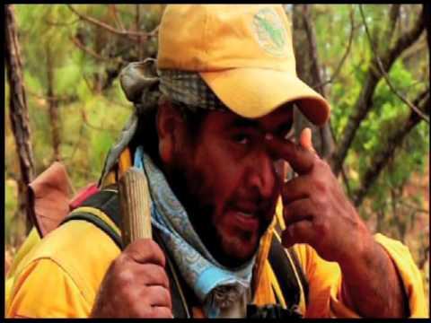 Entrevista Eduardo Cruz Castañeda, Director Forestal y Manjeo de Fuego Semadet