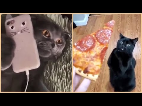 Funny Cats will make you LAUGH YOUR HEAD OFF 🤣 - Funny Cat Videos Compilation Cute Cats Cafa Land#3